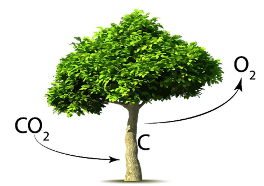 QINTX_Green_Fund_Riforestazione